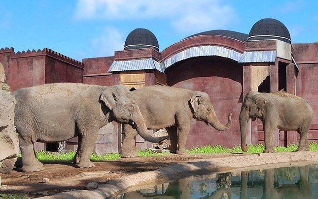 Polynesian Elephants Observatory 2/5 pax Magic Natura Animal, Waterpark & Polynesian Resort Benidorm