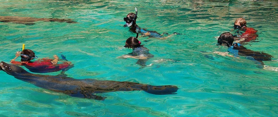 INTERACIÓN + SNORKEL CON LEONES MARINOS Magic Natura Animal, Waterpark Resort Benidorm